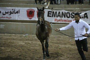 ورزش سوارکاری و صنعت پرورش اسب شهرستان رفسنجان