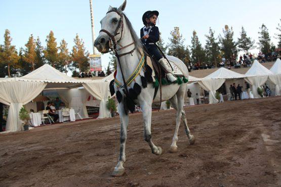 دومین مسابقه شو سواره اصیل اسبان بومی فلات ایران طلای سبز در رفسنجان برگزار شد