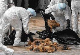 بیماری آنفلوانزای فوق حاد پرندگان را بشناسیم و آنرا جدی بگیریم