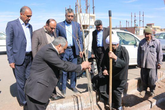 روز درختکاری در رفسنجان گرامی داشته شد / تصاویر