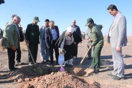 اجرای طرح ملی بسیج همگانی نهالکاری در رفسنجان/ تصاویر