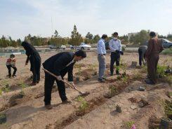 راه اندازی نخستین مزرعه تحقیقاتی کشت و برداشت گل محمدی در دانشگاه پیام نور رفسنجان