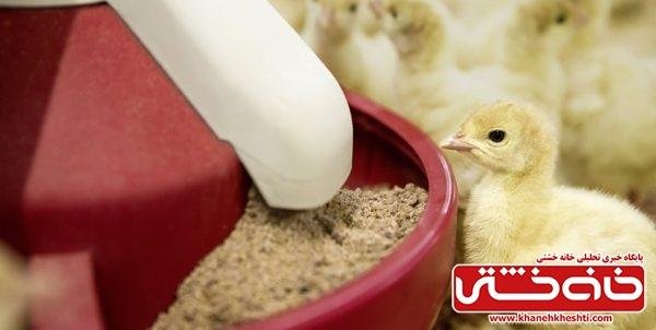 آشفتگی بازار نهاده قیمت مرغ را گران کرد/خوراک دام دولتی سر از بازار سیاه در میآورد