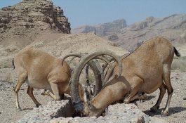 کم آبی و کام خشک حیات وحش