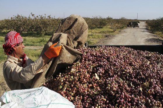 مورد مثبت کرونا در بین کارگران فصلی نداشتیم